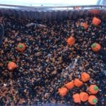Pumpkin Spice Sensory Rice